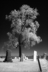 First try with Efke IR820 Aura film