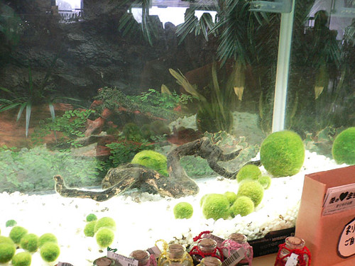 Marimo World