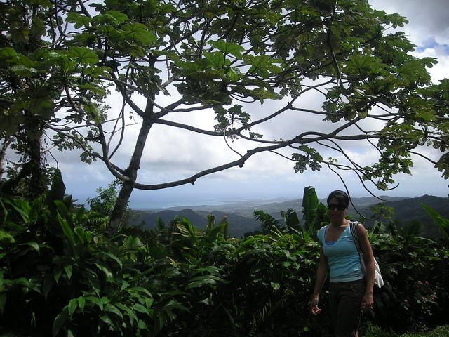 Guided El Yunque Rainforest Beach Tour