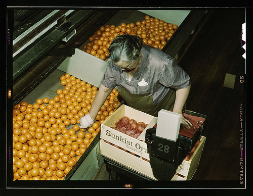 Packing oranges at a co-op orange packing plant, Redlands, Calif. Santa Fe R.R. trip (LOC) by The Library of Congress
