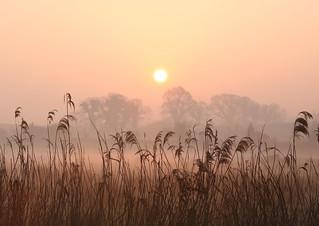 Misty Dawn, March 2007