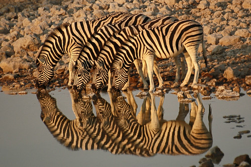 reflection - namibia (africa)