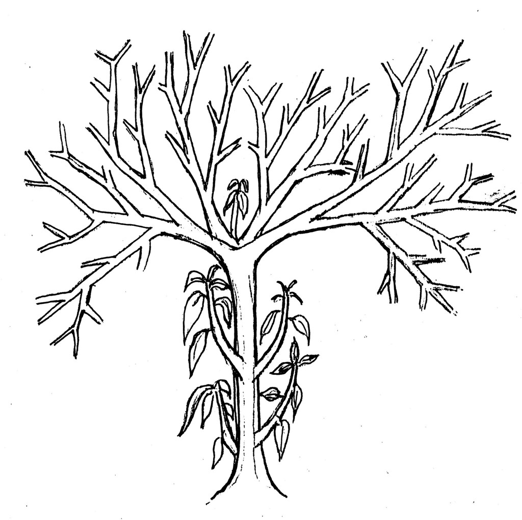 Coconut Tree Coloring Sheet Coloring Pages Coconut Tree Coloring Page
