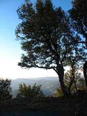 View from Mt. Hamilton Summit