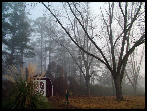 trees atlanta fog georgia backyard shed newnan