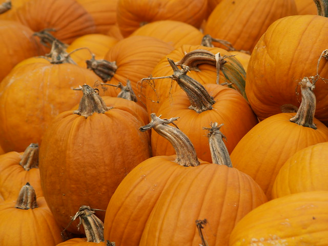 Pumpkin season in Manotick, near Ottawa, Ontario