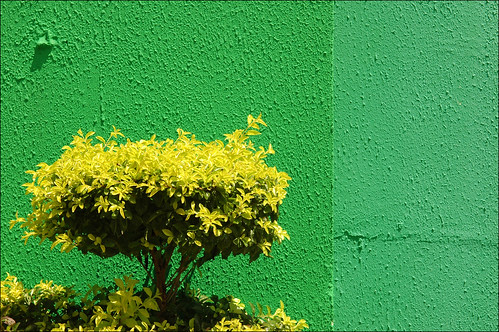 brasil - study in yellow and green #1