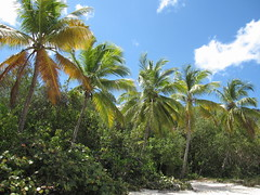Palm trees at Magen's Beach