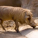 San Diego Zoo 115