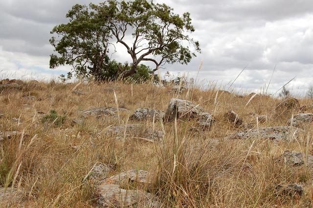 Native grassland on the outskirts of Melbourne