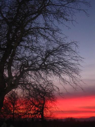 california sunset tree redding