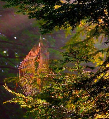 ohio cleveland iba naturesfinest kirtland holdenarboretum geaugacounty diamondclassphotographer flickrdiamond betterthangood stebbinsgulch llovemypic naturalhistorylandmark treehugger007