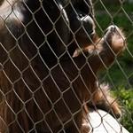 Los Angeles Zoo 072