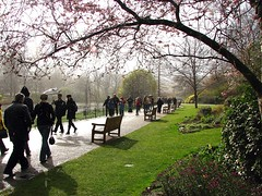 St James's Park In The Rain