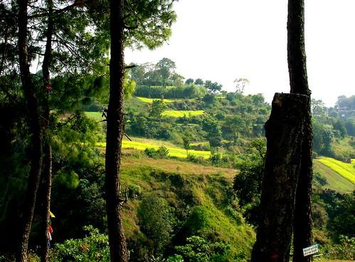 Pine trees, terraced hillside, Tibetan Prayer flags, Nepalese sign, Nepal - photo by Glenn by Wonderlane