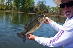 northern pike(0.0), bass(1.0), fish(1.0), fishing(1.0),