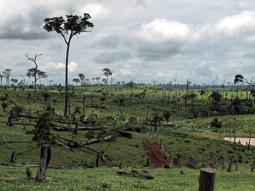 Deforestation in Capixaba, Acre, Brazil