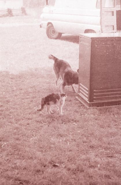 Woofur Dog Cat Services Richmond Hill On