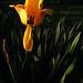 05-04-11: Sunrise