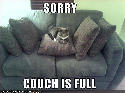 Funny_pictures_cat_wilsonyang_com 2-12-2007 9-44-18 p.m. 500x375