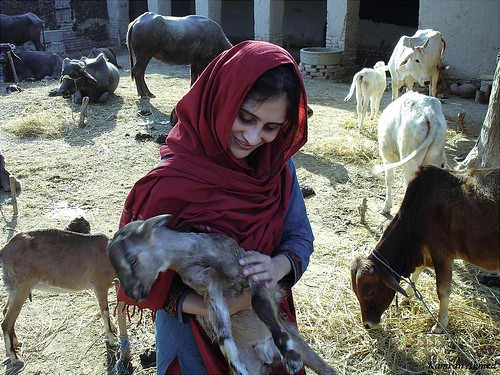 village Life in Sind Pakistan