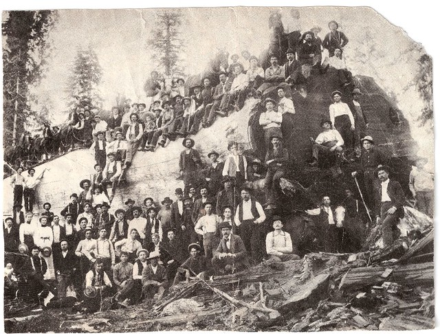 People and Horses on a Gigantic Redwood Log; about 1900.