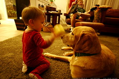 feeding the dog an 'apple'    MG 9639