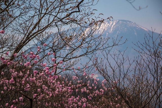 20150425-鳴虫山-0232.jpg
