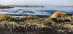 Iceland - Stokksnes/Vestrahorn - marram grass