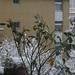 Flowers in snow by shirin pilehvari
