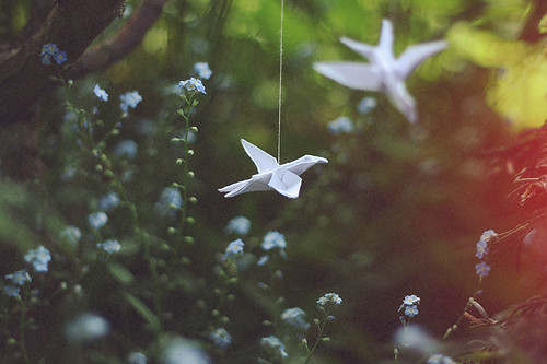 hummingbirds & paperplanes