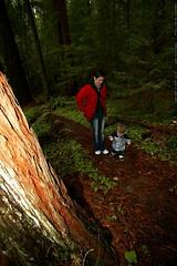 rachel & sequoia under the heritage grove redwoods  …