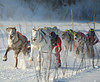 Now that's the way to ski Cross country skiing