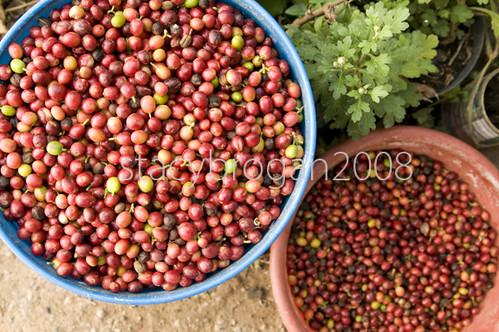 Huehuetenango Beans