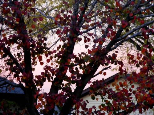 November across the street