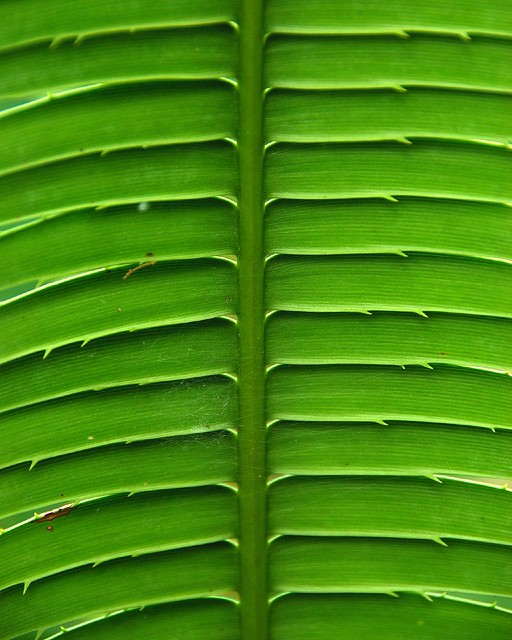 Parallel Lines In Nature Picture Gallery - Picturient.com