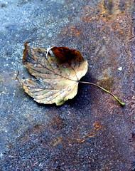 Verlaines leaf