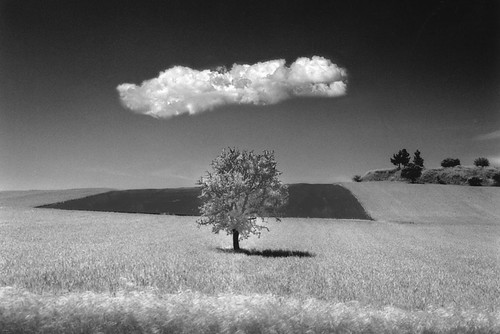 Tree-and-Cloud,Plagiari,Greece,-m'03