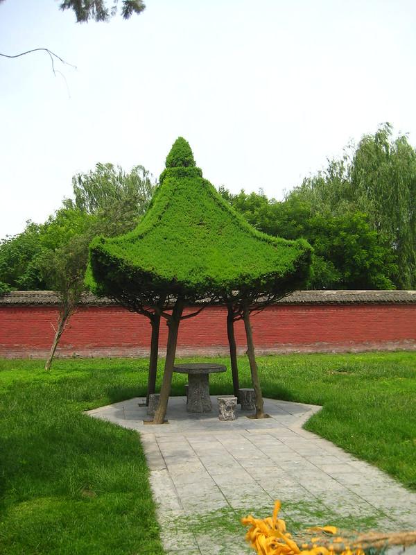A Grass Shelter