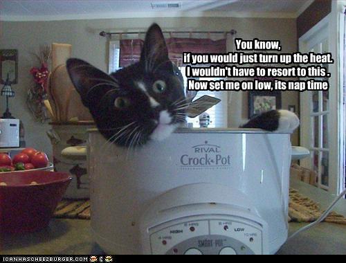 funny-pictures-cat-sleeps-in-crock-pot
