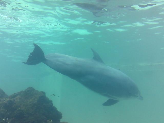 Sucks off a dolphin