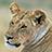 the Maasai Mara group icon