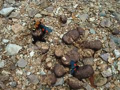 soil(0.0), litter(0.0), rubble(1.0), geology(1.0), rock(1.0), gravel(1.0),