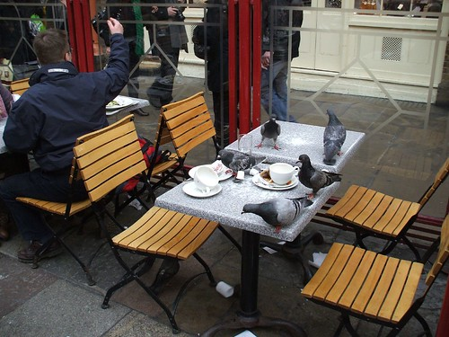 Pigeons Dining Out