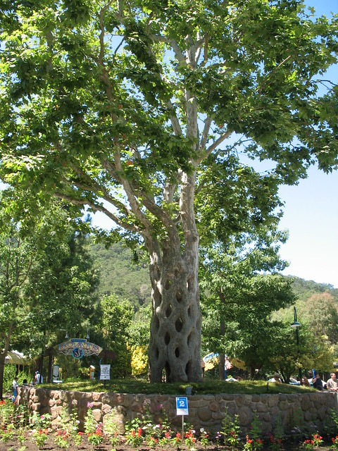 Gilroy gardens circus tree flickr photo sharing for Gilroy garden trees