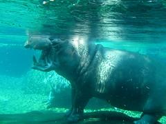 hippo mouth.JPG