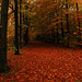 autumn forest carpet