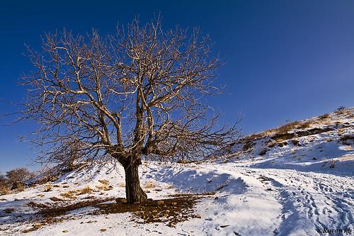 road old blue winter sky brown white mountain snow tree canon way landscape branch iran bend sigma soil single aged iranian 1770 footprint footstep kurdistan sine sena sanandaj dogleg kavan kordestan 400d awiar abidar سنندج کردستان kanishafa