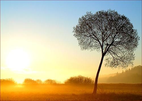 morning trees sun mist tree misty fog landscape bravo foggy loveit puu puud päike morningfog hommik themoulinrouge udu mistysunrise maastik foggysunrise olympuse400 abigfave welcometoestonia theunforgettablepictures favescontestwinner janne4janne alwayscomment5 udunepäikesetõus vanagram udune