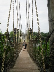 agriculture(0.0), suspension bridge(1.0), canopy walkway(1.0), rope bridge(1.0), walkway(1.0), bridge(1.0),